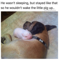 "I tell people I don't eat pork and they like ""WHAT DO YOU HAVE AGAINST PIGS"" I'm like ""BISH I LOVE PIGS THEY ADORABLE YOU THE ONE WHO CAN'T LIVE WITHOUT BACON ... HOW MANY INNOCENT LIL PIGGIES DONE DIED FOR YOUR ADDICTION ... NOW WHO THE ONE THAT HATE PIGS"" 😂😂😂: He wasn't sleeping, but stayed like that  so he wouldn't wake the little pig up..  @DrSmashlove I tell people I don't eat pork and they like ""WHAT DO YOU HAVE AGAINST PIGS"" I'm like ""BISH I LOVE PIGS THEY ADORABLE YOU THE ONE WHO CAN'T LIVE WITHOUT BACON ... HOW MANY INNOCENT LIL PIGGIES DONE DIED FOR YOUR ADDICTION ... NOW WHO THE ONE THAT HATE PIGS"" 😂😂😂"