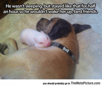 Friends, Tumblr, and Best: He wasn'tsleeping,butstayed likethat for half  an hourso hewouldn'twake herup.best friends  you should probably go to TheMetaPicture.com epicjohndoe:  Little Piggy Found His Pillow