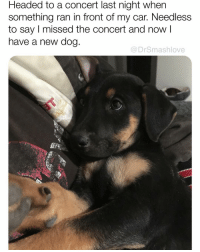 Future, Memes, and Reddit: Headed to a concert last night when  something ran in front of my car. Needless  to say I missed the concert and now l  have a new dog  @DrSmashlove 10-10 would have done this unless it were a Rhianna concert in which case I would have snuck little man into the concert in my backpack next to my herbal stash because what better way to spend our first day together than meeting his future mama 🥰🥰🥰😍😂 (pic: reddit u-boulderkitty)