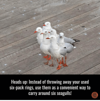 Dank, 🤖, and Rings: Heads up: Instead of throwing away your used  six-pack rings, use them as a convenient way to  carry around six seagulls! Try it!