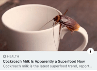"Apparently, Drinking, and Food: HEALTH  Cockroach Milk Is Apparently a Superfood Now  Cockroach milk is the latest superfood trend, report... <p><a href=""https://themasterplanner.tumblr.com/post/174425253203/libertarirynn-they-will-take-absolutely"" class=""tumblr_blog"">themasterplanner</a>:</p>  <blockquote><p><a href=""https://libertarirynn.tumblr.com/post/174425185384"" class=""tumblr_blog"">libertarirynn</a>:</p>  <blockquote><figure class=""tmblr-full"" data-orig-width=""500"" data-orig-height=""281"" data-tumblr-attribution=""lifetimetv:Vb5yITZrN-SkOBpIM_syCg:ZtKMan2Kn3tMq""><img src=""https://78.media.tumblr.com/92683c4bdefc76f212a5d54a276ff83b/tumblr_oom3l2gYWa1tb8iyko1_500.gifv"" data-orig-width=""500"" data-orig-height=""281""/></figure></blockquote>  <p>They will take absolutely anything and call it a ""super food,"" won't they?</p></blockquote>  <p>Frankly I don't care if it cures every disease in the world; the very idea of drinking ""cockroach milk"" gives me hives.</p>"