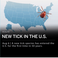 Animals, Asian, and Memes: HEALTH  NEW TICK IN THE U.S  Aug 6 A new tick species has entered the  U.S. for the first time in 50 years. An invasive new tick species has entered the U.S. for the first time in 50 years. The tick is called Haemaphysalis longicornis, or the Asian long-horned tick, and is spreading rapidly along the Eastern Seaboard. So far the tick has been reported in seven states, mostly residing in suburbs of New York City. ___ Public health experts are concerned about the arrival of this new tick species. In Asia, this species carries a virus that kills 15 percent of its victims. In the U.S., the tick is currently a greater threat to livestock as they do not bite humans as often. ___ Long-horned ticks can multiply quickly, and often causes death in animals from sucking large amounts of blood at a rapid rate. The ticks traditionally bloat up until they are unable to support their own weight. ___ After a full meal of blood, females can lay hundreds of fertile eggs without mating. ___ The first discovery of a long-horned tick was found last summer in western New Jersey. They have since been found in Bergen, Essex and Middlesex counties in New Jersey as well as wooded and grassy areas of New York's Westchester County.