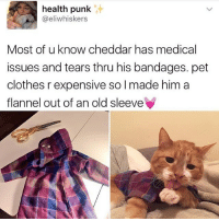 Clothes, Memes, and Butterfly: health punk  @eliwhiskers  Most of u know cheddar has medical  issues and tears thru his bandages. pet  clothes r expensive so I made him a  flannel out of an old sleeve Follow my other accounts @antisocialtv @lola_the_ladypug @x__antisocial_butterfly__x