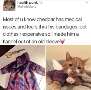 Clothes, Old, and Wholesome: health punk  @eliwhiskers  Most of u know cheddar has medical  issues and tears thru his bandages. pet  clothes r expensive so I made him a  flannel out of an old sleeve How wholesome, Health Punk!