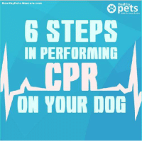 mercola: Healthy Pets. Mercola.com  Healthy  STEPS  IN PERFORMING  ON YOUR DOG