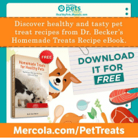 Get your FREE copy now at Mercola.com/PetTreats: Healthy  pets  With Dr, Karen Becker  HealthyPets.Mercola.com  Discover healthy and tasty pet  treat recipes from Dr. Becker's  Homemade Treats Recipe eBook.  DOWNLOAD  IT FOR  FREE  FREE  Homemade Treats  for Healthy Pets  Nutritious Recipes for Your  Cats and Dogs  By Dr. Kare Becke  Mercola.com/PetTreats Get your FREE copy now at Mercola.com/PetTreats