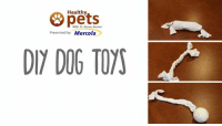 Thinking of a buying new toy for your pet? How about MAKING your own instead?: Healthy  & With Dr. Karen Becker  Presented by  Mercola  DIY DOG TOYS Thinking of a buying new toy for your pet? How about MAKING your own instead?