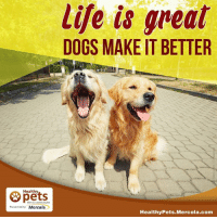 Memes, 🤖, and Becker: Healthy  With Dr. Karen Becker  Presented by Mercola  life is great  DOGS MAKE IT BETTER  Healthy Pets Mercola.com