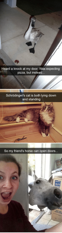 animalsnaps:Animal snaps: Heard a knock at my door. Was expecting  pizza, but instead   Schrödinger's cat is both lying down  and standing   So my friend's horse can open doors..  20J16 animalsnaps:Animal snaps
