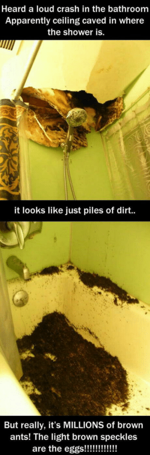 Apparently, Shower, and Ants: Heard a loud crash in the bathroom  Apparently ceiling caved in where  the shower is.  it looks like just piles of dirt..  But really, it's MILLIONS of brown  ants! The light brown speckles Haaaaans