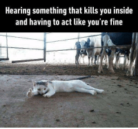 9gag, Cute, and Memes: Hearing something that kills you inside  and having to act like you're fine I'm very very okay. 🐱Follow @9gag for more cute memes. - - cr: yoheinotheyyo | twitter - - 9gag thumbsup relatable
