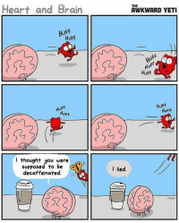Heart and Brain  Huff  HUFF  Huff  Huff  I thought you were  e)))  supposed to be  decaffeinated  THE  AWKWARD YETI  Huff  Huff  HUFF  HUFF  OD  I lied. { funnytumblr textposts funnytextpost tumblr funnytumblrpost tumblrfunny followme tumblrfunny textpost tumblrpost haha shoutout}
