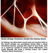 """A fact you need to know: Heart strings (tendons) inside the human heart.  In biology we dissected a heart and our teacher told us  the heart strings can sometimes break after a deep  emotional trauma causing the heart to lose form, and  as a result be unable to pump blood effectively. You  could literally die from a broken heart. It's called  """"Broken Heart Syndrome."""" A fact you need to know"""