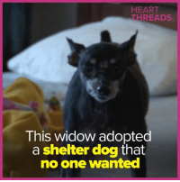 Memes, Heart, and 🤖: HEART  THREADS  This widow adopted  a shelter dog that  no one wanted