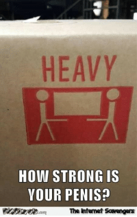 Funny, Penis, and Strong: HEAVY  HOW STRONG IS  VOUR PENIS  The htenet Scavengers <p>Funny daily picture dump  Because youre worth it  PMSLweb </p>