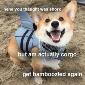 Wholesome, Adorable, and Via: hehe you thaught was shork  but am actually corgo  get bamboozled again now this is both adorable and wholesome. via /r/wholesomememes https://ift.tt/2Us9s09