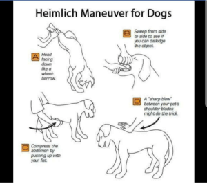 "Dogs, Head, and Weird: Heimlich Maneuver for Dogs  Sweep from side  to side to see if  you can disbdge  the object  Head  facing  down  like a  wheel  barrow  A ""sharp blow  between your pet's  shoulder blades  might do the trick.  Compress the  abdomen by  pushing up with  your fist Not exactly a comic so I hope this is okay. If you take away the title and the rest of the words its just an upright doing really weird stuff to a dog and then petting it when its all over."