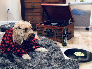Hein My mini golden doodle is a hipster