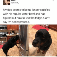 Memes, How To, and Water: heko  lacat  @illacat  My dog seems to be no longer satisfied  with his regular water bowl and has  figured out how to use the fridge. Can't  say I'm not impressed. Smart boy