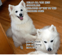 now that so many more like has come...: HELLO ALL YOU NEW  SHOOBLETS  WELCOME OF YOU TO THE  SHOOBIE PAGE  get Off Shoob  you are doing  me a hurt now that so many more like has come...