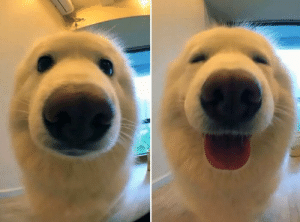 Hello did you just say I was a good boy?: Hello did you just say I was a good boy?