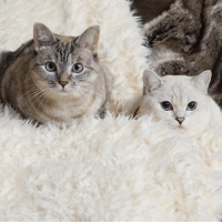 Hello everyone, we added Catcon meet and greet on Saturday. Limited tickets available for both Saturday and Sunday! 100% of net proceeds benefit animals in need. bit.ly-NalacatCatcon: Hello everyone, we added Catcon meet and greet on Saturday. Limited tickets available for both Saturday and Sunday! 100% of net proceeds benefit animals in need. bit.ly-NalacatCatcon