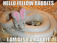 <p>That feel when you&rsquo;re a non-human alter and front in a crowd&hellip;</p>: HELLO FELLOW RABBITS  TAM ALSOA RABBIT <p>That feel when you&rsquo;re a non-human alter and front in a crowd&hellip;</p>