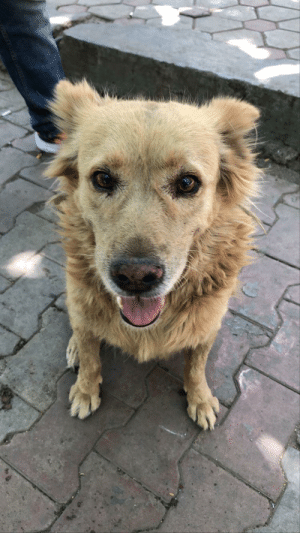 Hello guys this is M416, lives near my college, he isnt able to walk properly but when he sees me he cannot resist himself and run towards me smiling and that's the best feeling :) (sorry for my bad english): Hello guys this is M416, lives near my college, he isnt able to walk properly but when he sees me he cannot resist himself and run towards me smiling and that's the best feeling :) (sorry for my bad english)