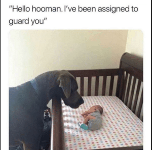 "Hello hooman: ""Hello hooman. I've been assigned to  guard you"" Hello hooman"