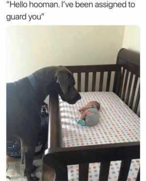 """Hello, Memes, and Been: """"Hello hooman. I've been assigned to  guard you"""" https://t.co/5tl3AJE4IC"""