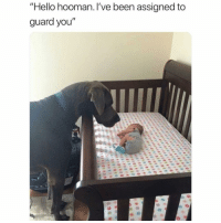 """Hello, Memes, and Been: """"Hello hooman. I've been assigned to  guard you"""" So guard I shall !"""