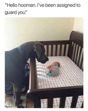 "Wholesome: ""Hello hooman. I've been assigned to  guard you"" Wholesome"