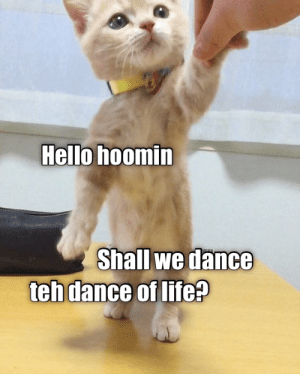 teh: Hello hoomin  Shall we dance  teh dance of life?