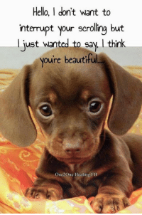 You Are Beautiful Too!: Hello, I don'tw  nterupt your scrolling but  just wanted to say, think  oure beautiful  interrupt your scrolling but  One2One Healing FB You Are Beautiful Too!