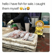 Cute, Hello, and Fish: hello i have fish for sale. i caught  them myself he cute @djbewbz