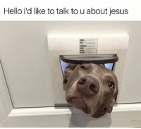 Cute, Funny, and Hello: Hello i'd like to talk to u about jesus 42 Cute Animal Memes That Never Stop Being Funny