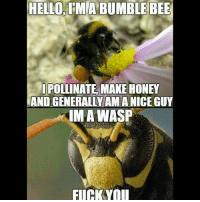 Ha!!!! bee bees wasp wasp fuckemboth lmmfao lmfao lmao funny hilarious damn sad true real truth dointhemost coldblooded coldworld factsonly smfh: HELLO, IMA BUMBLE BEE  IPOLLINATE MAKE HONEY  AND GENERALLYAMANICE GUY  IMA WASP  FLICKYOu Ha!!!! bee bees wasp wasp fuckemboth lmmfao lmfao lmao funny hilarious damn sad true real truth dointhemost coldblooded coldworld factsonly smfh