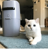Hello my friends, Litter Genie - The hassle-free compact cat litter disposal system - launched a fantastic giveaway and for 4 weeks, they are giving away 10 Litter Genie pails every week. On top of that, their grand prize is worth more than $2000! You should definitely check it out.  Click here to enter: https://rebrand.ly/LitterGenie  #StopCatLitterSmell #sponsored: Hello my friends, Litter Genie - The hassle-free compact cat litter disposal system - launched a fantastic giveaway and for 4 weeks, they are giving away 10 Litter Genie pails every week. On top of that, their grand prize is worth more than $2000! You should definitely check it out.  Click here to enter: https://rebrand.ly/LitterGenie  #StopCatLitterSmell #sponsored