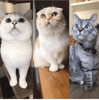 Hello my friends, we're super excited about CatCon and we can't wait to meet everyone there! We only have few tickets left for the meet and greet on Saturday! Come meet me and my family! We will also have a booth with our merchandises there! @catconworldwide www.nalacat.com: Hello my friends, we're super excited about CatCon and we can't wait to meet everyone there! We only have few tickets left for the meet and greet on Saturday! Come meet me and my family! We will also have a booth with our merchandises there! @catconworldwide www.nalacat.com