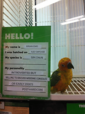 Emo, Hello, and Birds: HELLO  My name is BRIAN EMO  I was hatched on 9,021 DAYS AGO  My species isSUN CONURE  My personality  INTROVERTED BUT  WILLING TO DISCUSS MODDING CONSOLES  OR EARLY 2000'S  POST-HARDCORE  Conure  THI