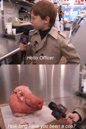 Hello Officer: Hello Officer.  How long have you been a cop?
