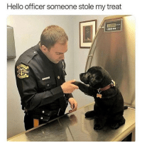 Who would do such a thing to a lil bby 😭😡: Hello officer someone stole my treat Who would do such a thing to a lil bby 😭😡