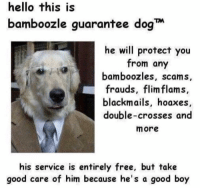 Hello, Memes, and Free: hello this is  bamboozle guarantee dog  he will protect you  from any  bamboozles, scams,  rauds, flimflams  blackmails, hoaxes  double-crosses and  more  his service is entirely free, but take  good care of him because he's a good boy