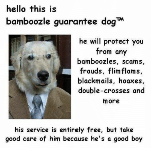 Dog Memes Of The Day 32 Pics – Ep38 #dogs #dogmemes #lovelyanimalsworld - Lovely Animals World: hello this is  bamboozle guarantee dog  he will protect you  from any  bamboozles, scams,  frauds, flim flams,  blackmails, hoaxes  double-crosses and  more  his service is entirely free, but take  good care of him because he's a good boy Dog Memes Of The Day 32 Pics – Ep38 #dogs #dogmemes #lovelyanimalsworld - Lovely Animals World