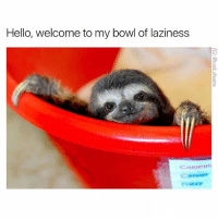 Funny, Hello, and Omg: Hello, welcome to my bowl of laziness Omg thank you for having me
