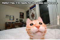 Hello: Hello? Yes, I'm ready for the video conference.