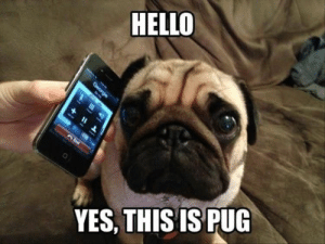 Dog Memes Of The Day 32 Pics – Ep35 #dogs #doglovers #lovelyanimalsworld - Lovely Animals World: HELLO  YES, THISIS PUG Dog Memes Of The Day 32 Pics – Ep35 #dogs #doglovers #lovelyanimalsworld - Lovely Animals World