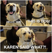 Hello, Brand New, and Dog: HELLO, YESTHIS IS DOG  KAREN SAID WHAT?!  made with mematic Lamenting Lab, a brand new short-box?