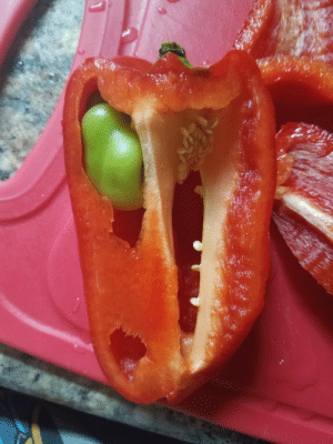 Head, Target, and Tumblr: hellokittyismyspiritanimal:  nightjarring: My mom bought a pepper and it had this second secret, smaller pepper inside it, pepper in peppu  T-Rex head