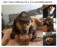 Memes, 🤖, and Unconditional Love: helo have a delivery for u. it is unconditional love  ups - Trending Memes